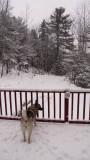 Jan. 2 is dog days!