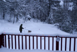 Then it's time for a walk in the snow...a favorite activity for Ron and PP!