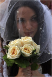 Brides Of March-White Roses