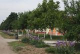 along village road