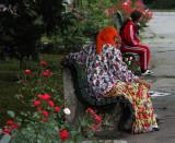 roses  in Targu Mures