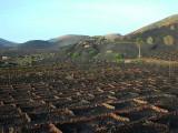 wine region La Geria