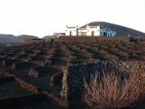 bodega in wine region La Geria