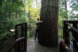 rain forest near Vancouver