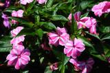 NG Impatience Mosaic Pink_1.JPG