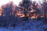 Frozen Woods On Bowen Road