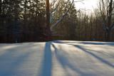 Shadows On A Winter Morn