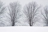 Knox Farm Trees In Snow 9:12 AM