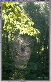 september netting