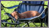 Max at picnic...