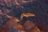 Un oiseau préhistorique_Prehistoric bird