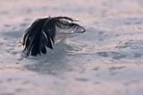 Glacon chevelu_Hairy Ice