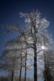Icy Sun