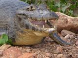 Pantanal 2007
