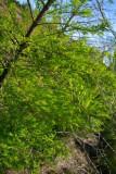 green cay march 09 014.jpg