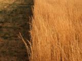Dscn11670001sunset wheat.JPG