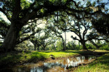 Fontainbleau State Park - Louisiana