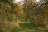 my littel garden