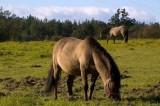 Pony in FLORIANKA on ROZTOCZE