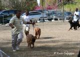 Bull Mastiff, Dogue De Bordeaux and Rottweiler