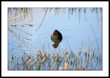 Reed lover