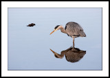 Heron and reflection