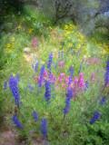 Desert Wildflowers #1Globe, AZ
