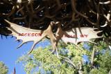 Moose antlers hung from elk antler arch