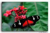 Brookside Garden Butterflies