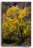 Fall Color at Zion