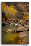 The Bottom of the Narrows @ Zion