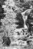 Hays Creek Falls - Infrared