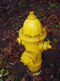 even the hydrants are changing color...