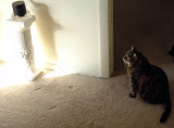 cats are naturally wary of CATs
