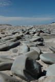 Stones in row with bird.JPG