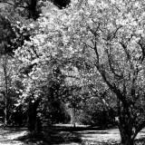 woodland - McLean