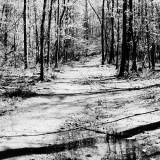 woodland - Scott's Run