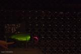 Champagne-15.jpg