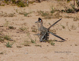 Mating Roadrunners