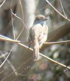 Caernarvon Diversion- Flycatcher Hotspot