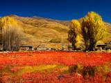 Red Grass Land