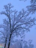 snow__day