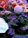 Diving in Paraiso Reef, Mayan Riviera