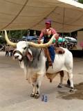 Posing on Bull, Tepozotlan
