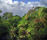 Amazon Of Costa Rica, Selva Of Tortuguero National Park