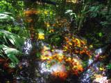 Colours of Tortuguero Selva