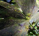 Flora Of Tortuguero Selva
