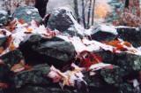 Late Fall Snowy Leaves on Rock Wall Boundary tb1009kk.jpg