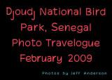 Djoudj National Bird Park, Senegal (February 2009)