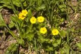 rr0808mtrain058flowers.jpg